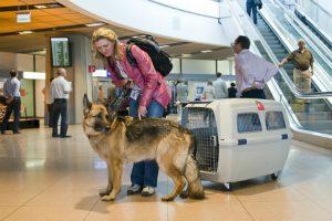 Gợi ý kinh nghiệm vận chuyển thú cưng bằng máy bay